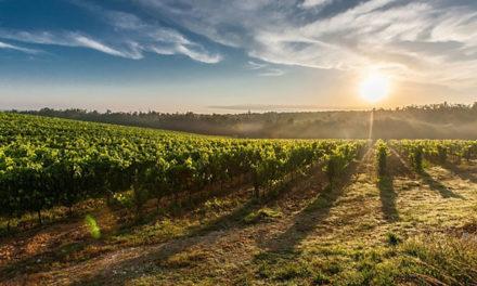 Regione Lazio: Sostegno per trasformazione, commercializzazione e sviluppo dei prodotti agricoli