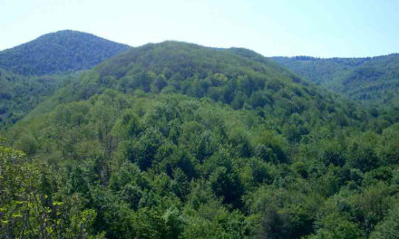 Regione Liguria: 27 milioni per foreste e agricoltura