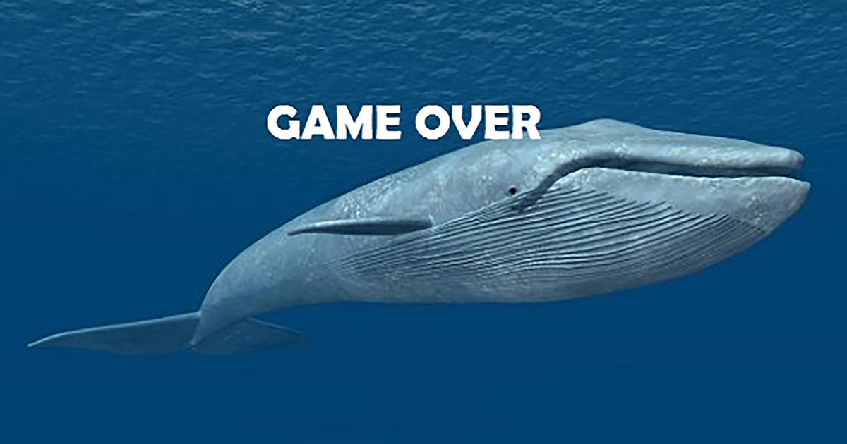 Blue Whale, la balena che uccide - PROGEU - Progress in European Union