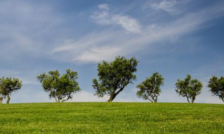 5 giugno. Giornata mondiale dell'ambiente