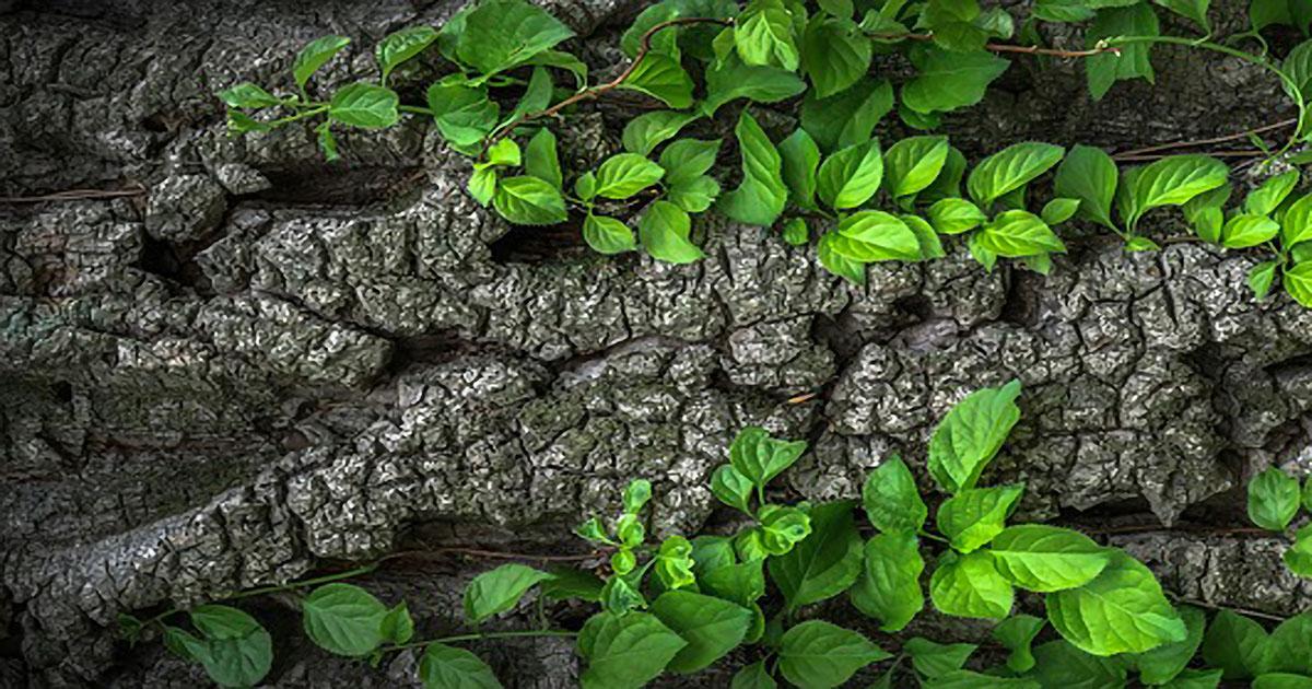 Gli ecovillaggi e la loro scelta sostenibile