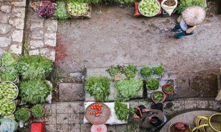Quando un alimento può essere considerato sostenibile? Europa e cittadini uniti, un Focus sull'Italia
