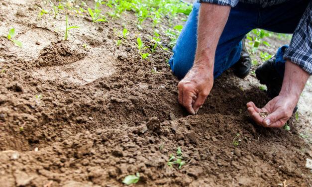 La condizionalità sociale della nuova PAC: un primo passo per i diritti dei lavoratori agricoli?