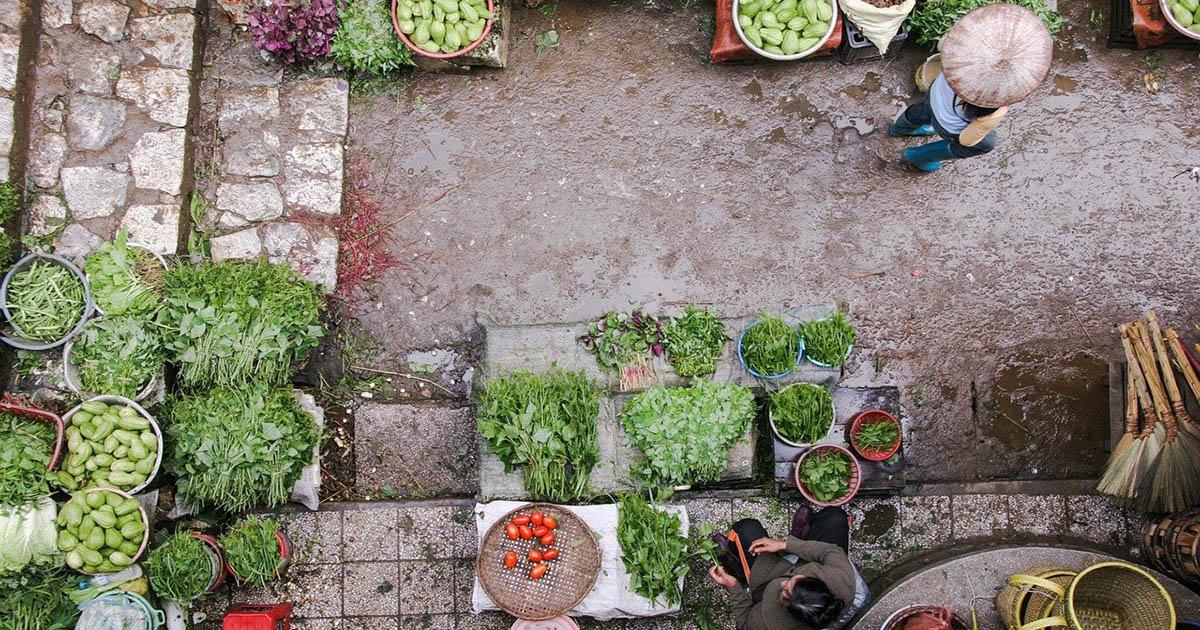 Produzione biologica: il nuovo piano d'azione europeo