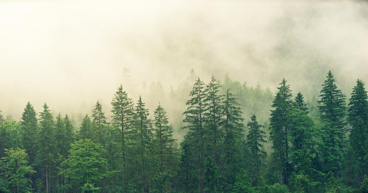 La nuova Strategia forestale dell'UE per il 2030