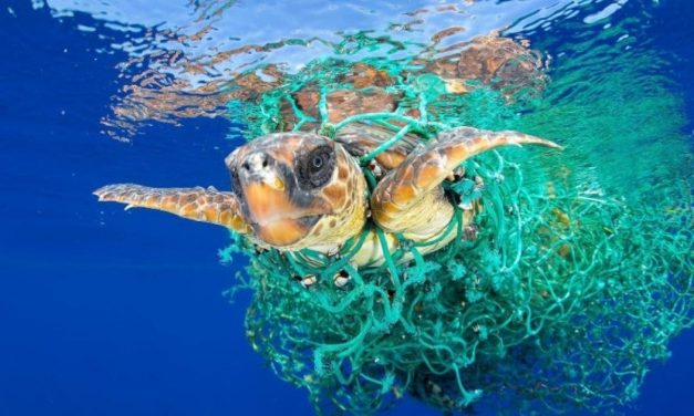 L'impegno dell'UE per la gestione sostenibile dell'acqua e dell'ambiente marino